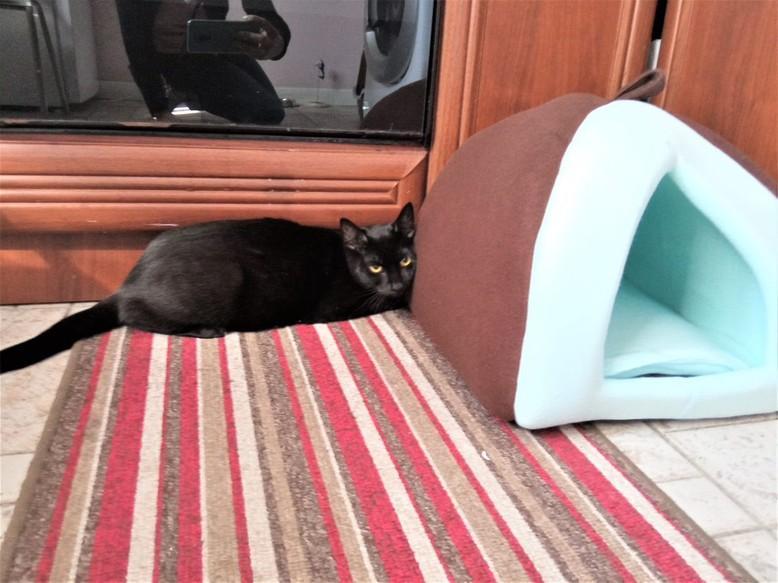 cat Boris | котарак Борис