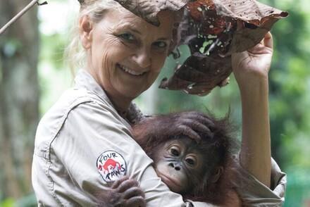 Hilfe für Orang-Utans
