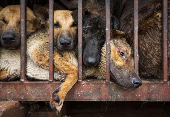 Hundefleischhandel