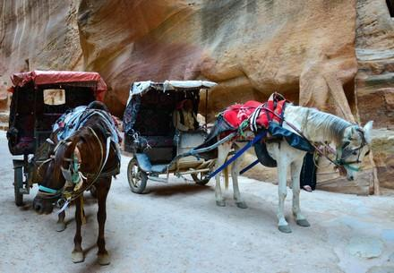 Help for working horses in Petra