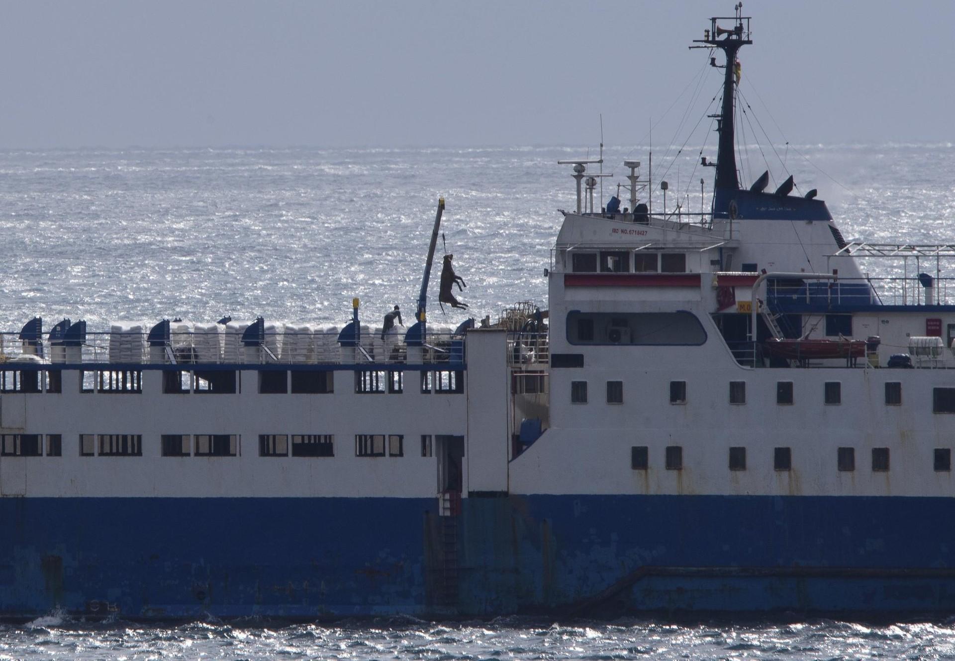 Tiertransport-Schiff in Cartagena