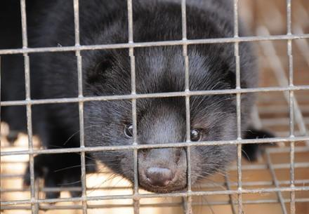 The cruelty behind fur