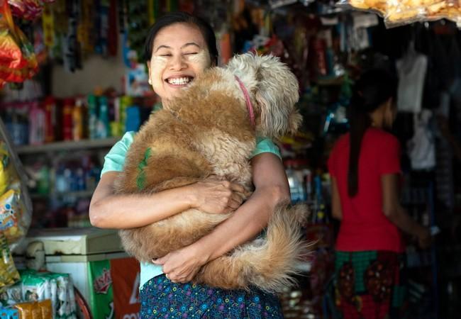 But du projet de QUATRE PATTES: zéro décès dus à la rage d'ici 2030 Le Myanmar a envoyé un premier signal important pour soutenir l'objectif de l'OMS - arrêter la transmission de la rage du chien à l'homme en adoptant un premier plan national contre cette maladie. L'objectif est d'éradiquer définitivement la rage au Myanmar d'ici 2030. Selon le LBVD, 70 % des quatre millions de chiens du pays sont des chiens errants. En 2017, environ 62'000 per-sonnes ont été mordues par des chiens ; 40 % des victimes de ces morsures étaient des enfants de moins de 15 ans. Environ 1'000 de ces morsures se sont avérées mortelles dues à des infections rabiques