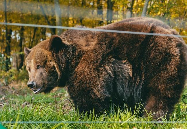 Bear Kvitka vit enfin la vie qu'elle mérite