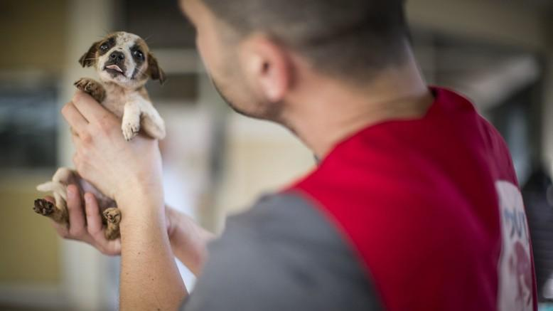 Helping animals effected by disasters