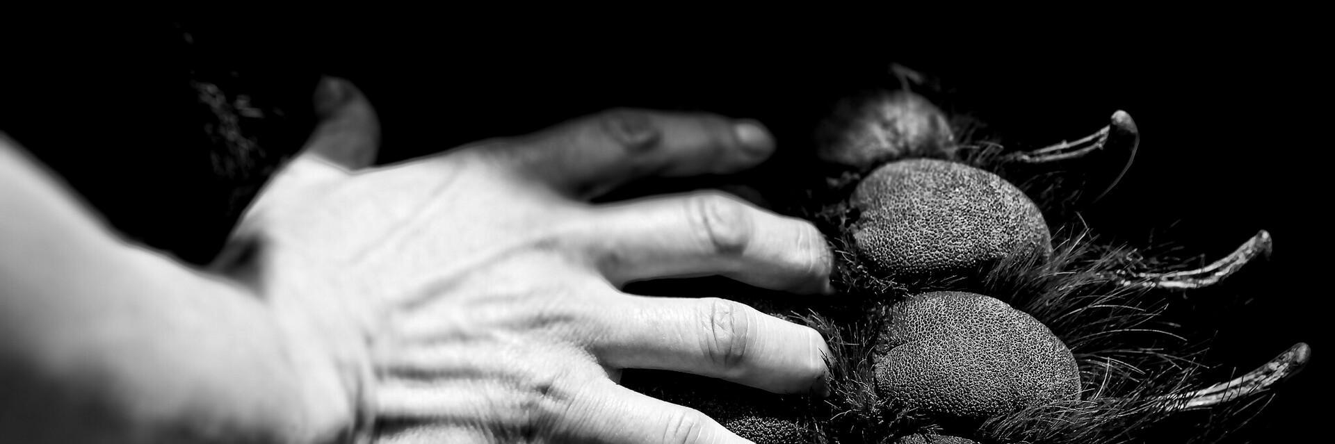 Hand auf Bärentatze