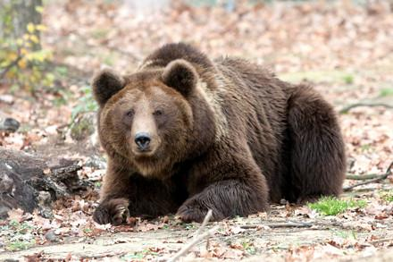 Aide aux ours