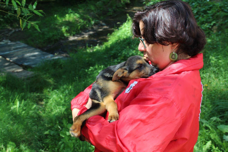 dog-grass-woman