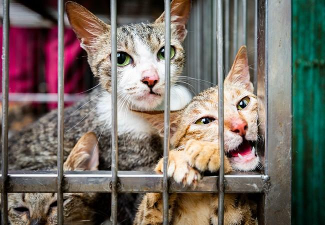 Des chats effrayés enfermés dans une cage sur un marché