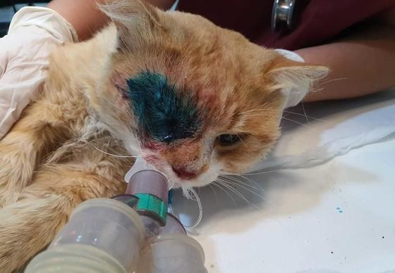 Injured cat gets a second chance