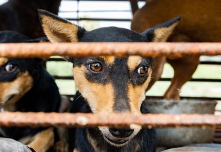Chien Lucy dans un cage