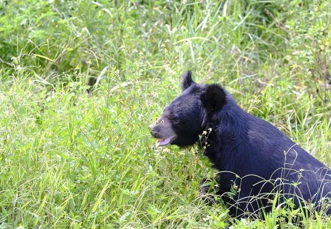Bear Keo sitting in a field