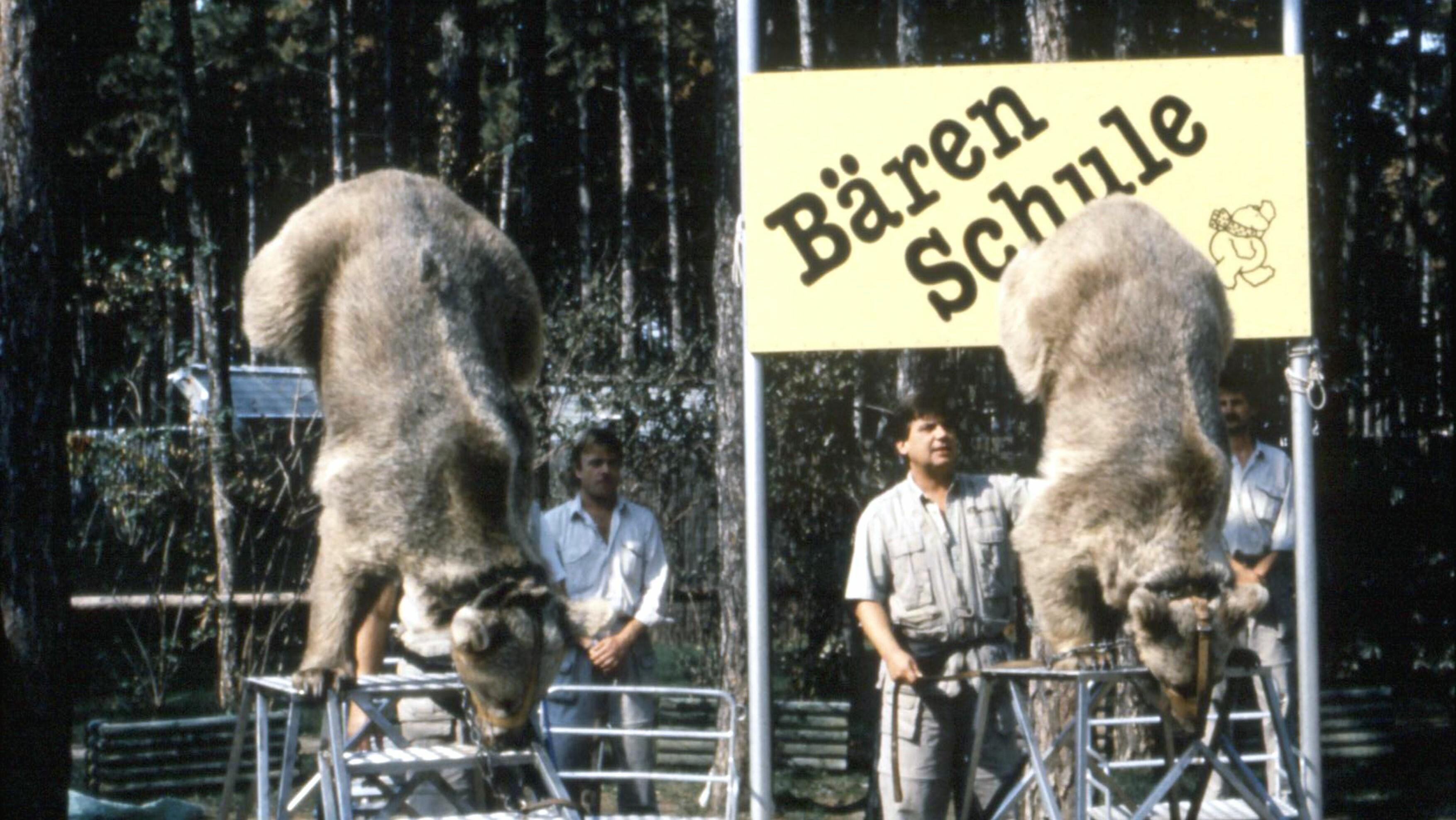Die Bären im Zirkus