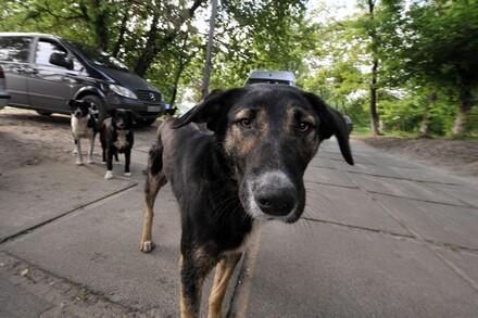 Les programmes d'aide aux animaux errants de QUATRE PATTES