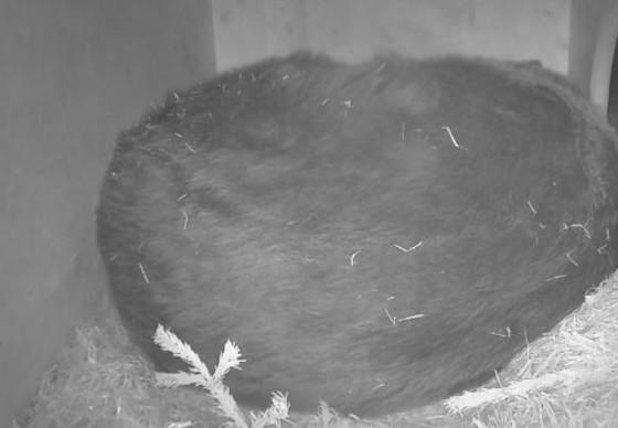Hibernation Box