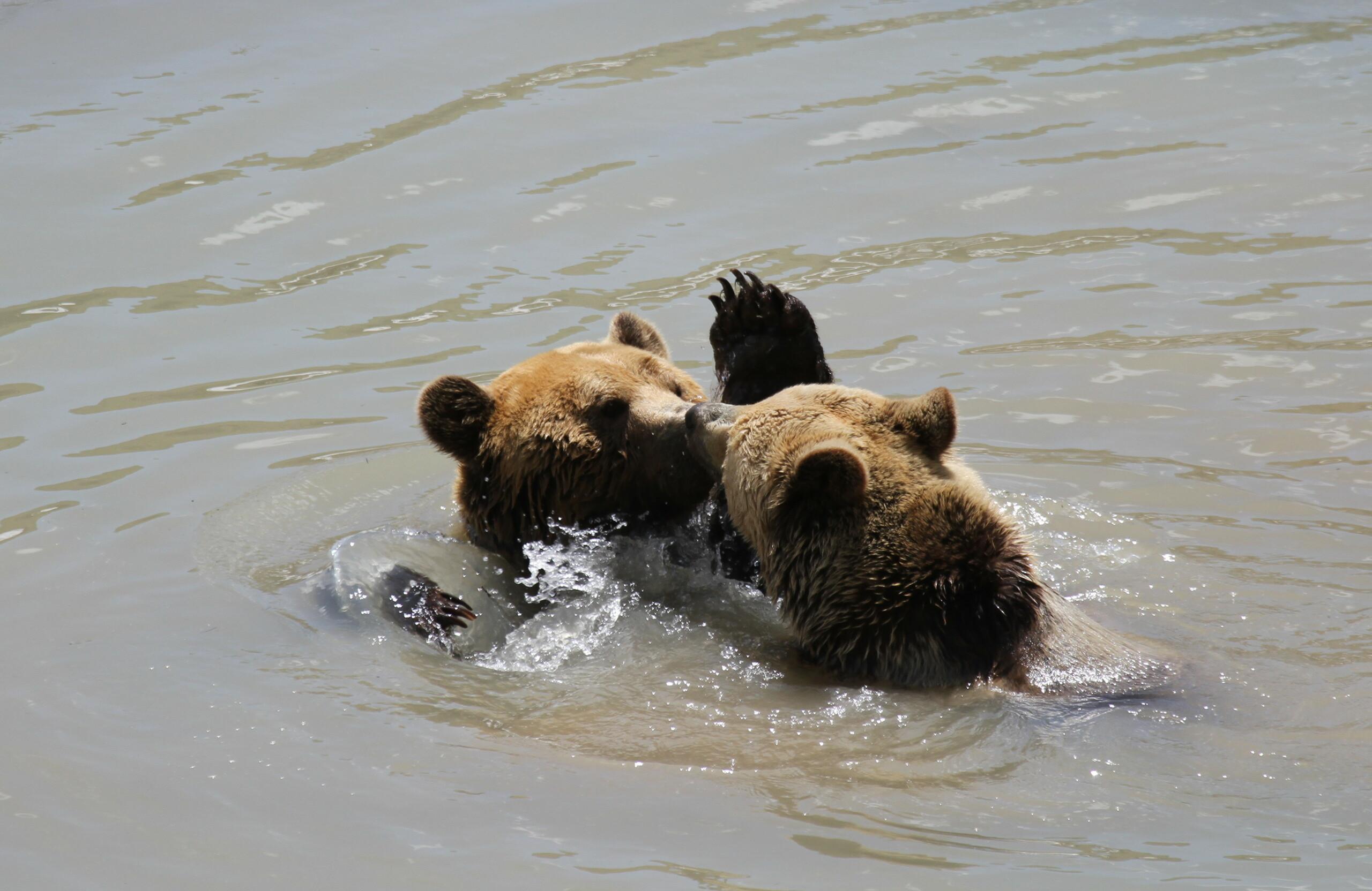 Amelia und Meimo am baden
