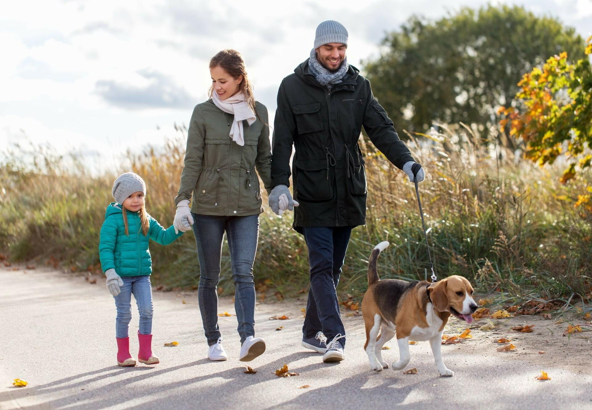 Happy mother, father and little daughter walking their dog