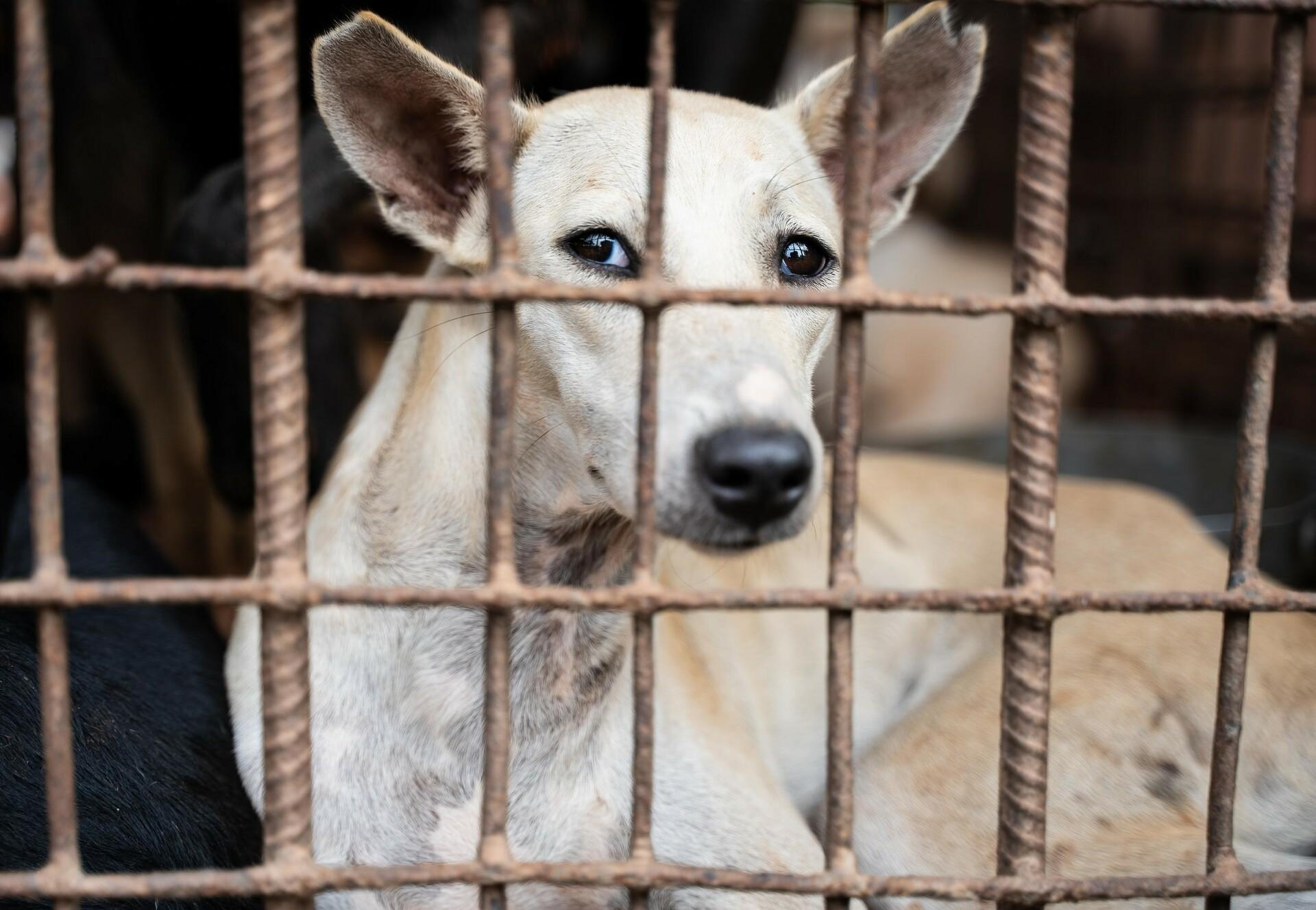 FOUR PAWS shuts down dog slaughterhouse in Cambodia critical to the trade