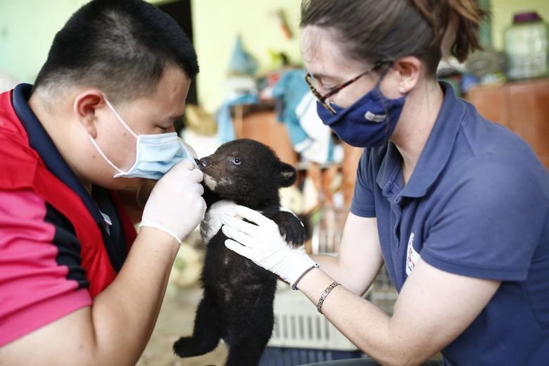 Bären-Baby wird untersucht