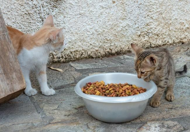Greece has many stray and feral cats who relied on communities for food