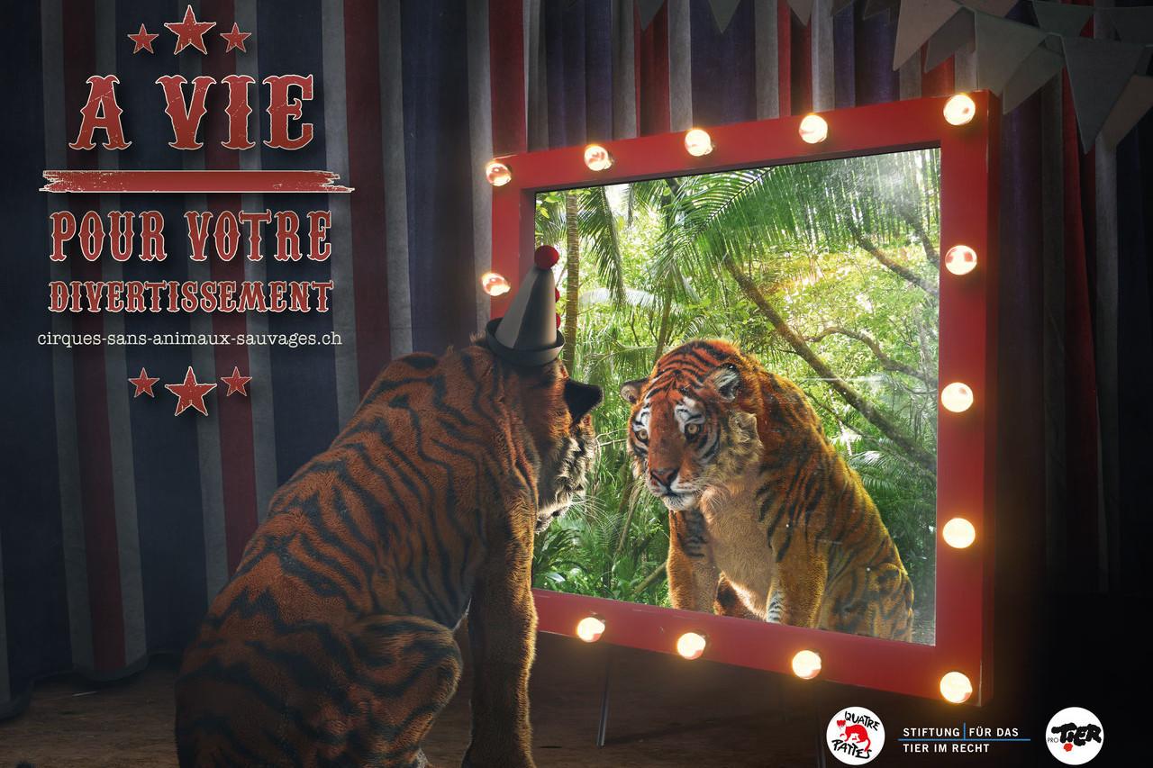 Campagne QUATRE PATTES - Animaux sauvages dans les cirques