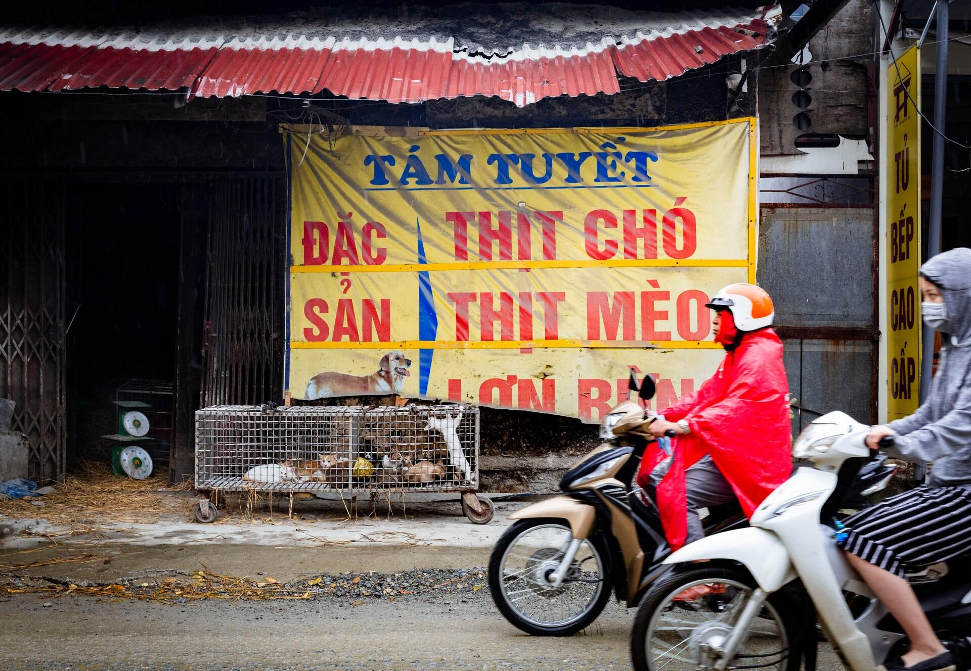 Dog and cat meat inn Southeast Asia