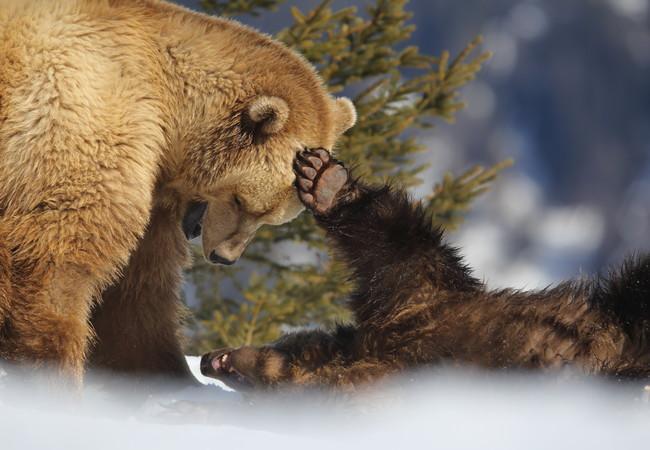 Напа и Амелия в убежище за мечки Ароза