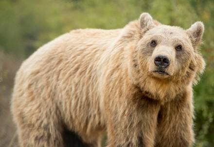 QUATRE PATTES s'engage pour les ours