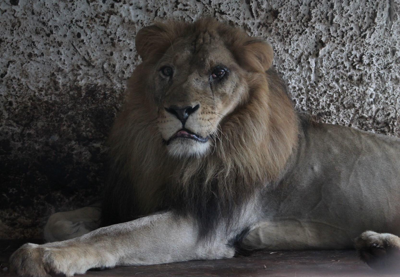 No More Fier Zoo (c) VIER PFOTEN