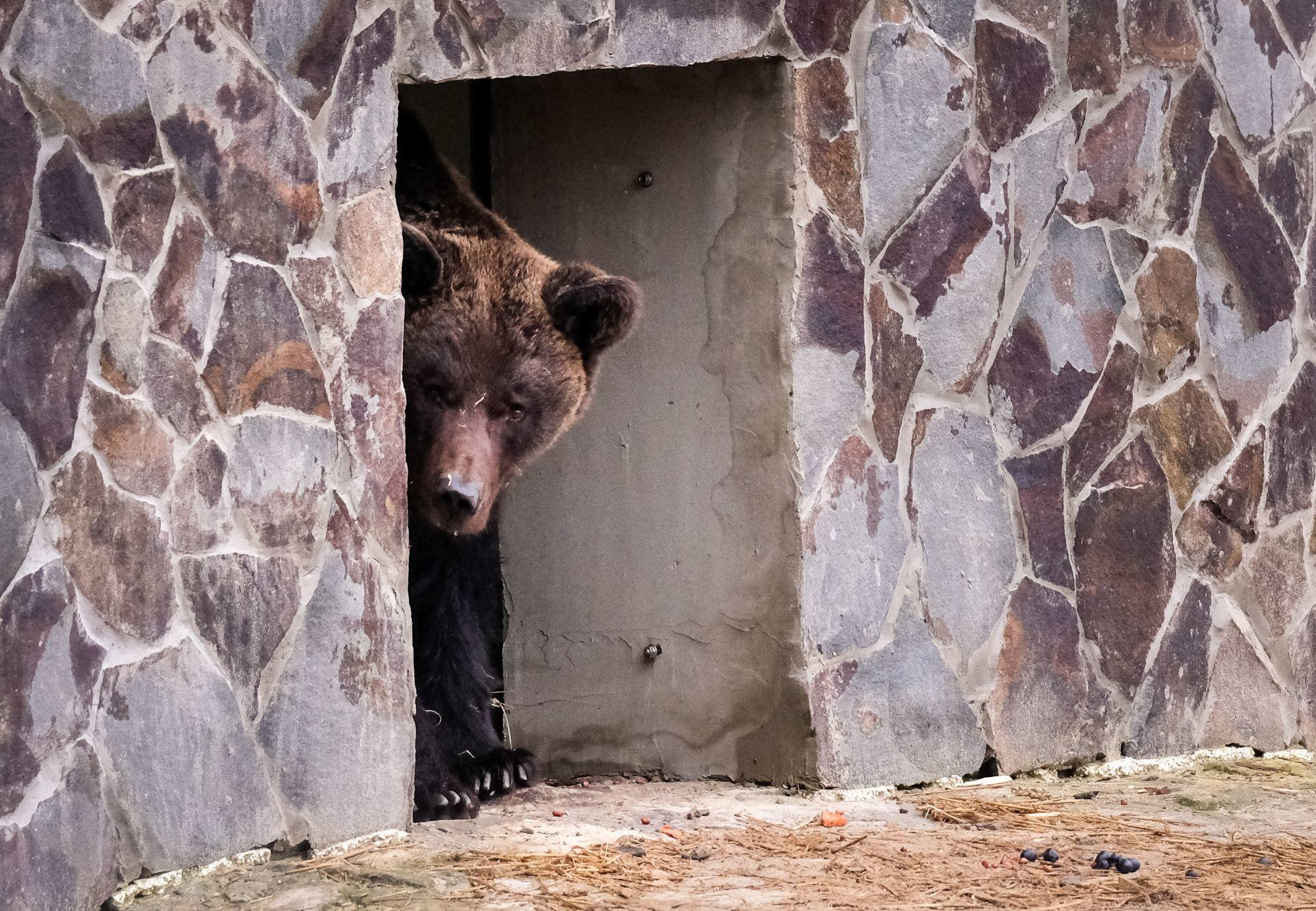 Bear Mashutka