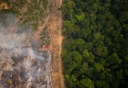 Amazon Rainforest in Burning Season