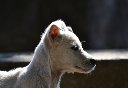 куче Айс