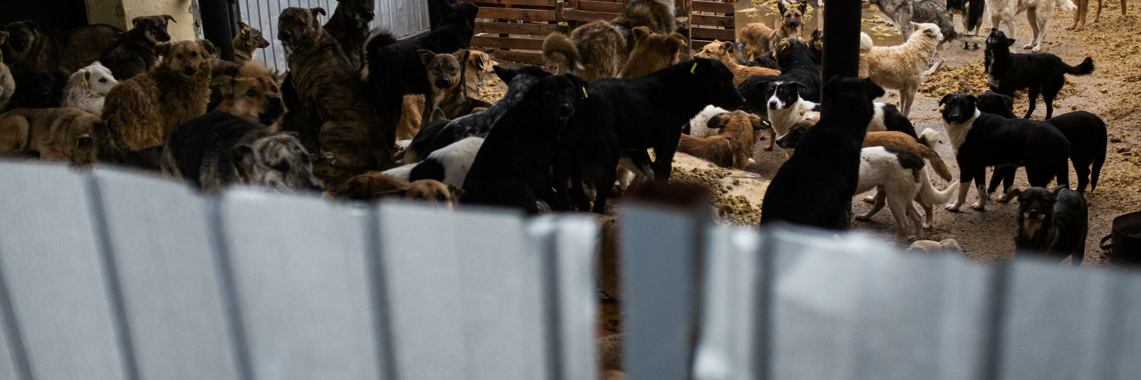Dogs in shelter in Moldova