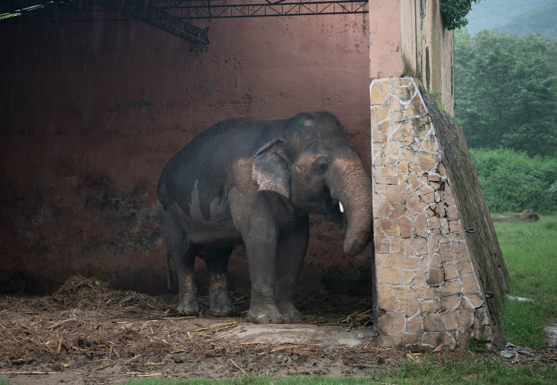 Elephant Kaavan will soon leave Pakistan