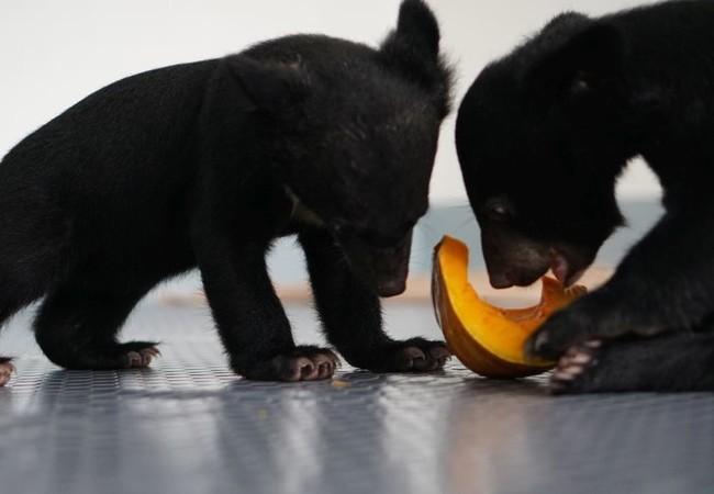 Les oursons Mi et Tam sont en sécurité