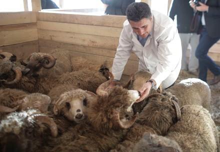 Die geretteten Tiere werden auf eine Farm transportiert.