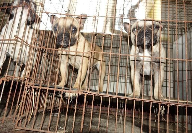Hundewelpen in schmutzigem Metallkäfig aus Beschlagnahmung in Polen