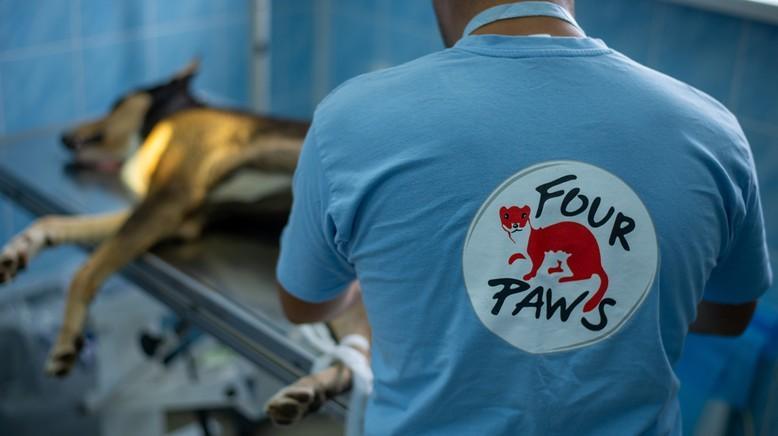A veterinary clinic for stray animals in Mykolaiv