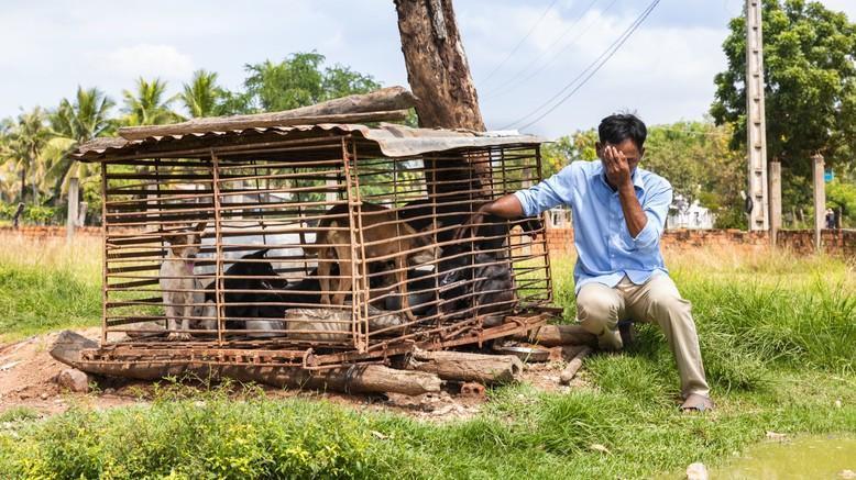 Schlachthaus-Schliessung in Kambodscha