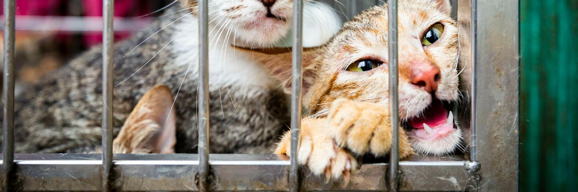 Katzen im Käfig