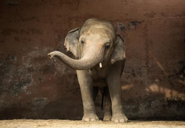 Kaavan has been lonely for a long time