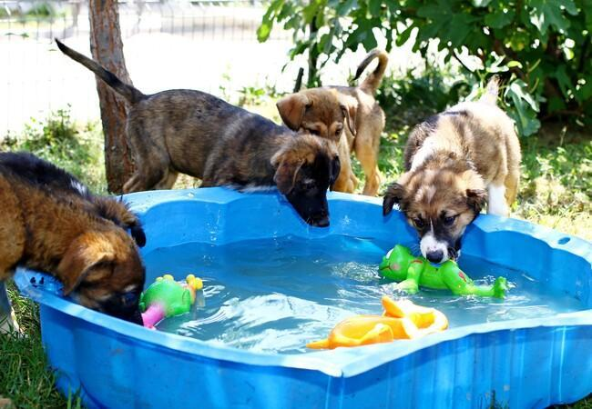 dogs play with water