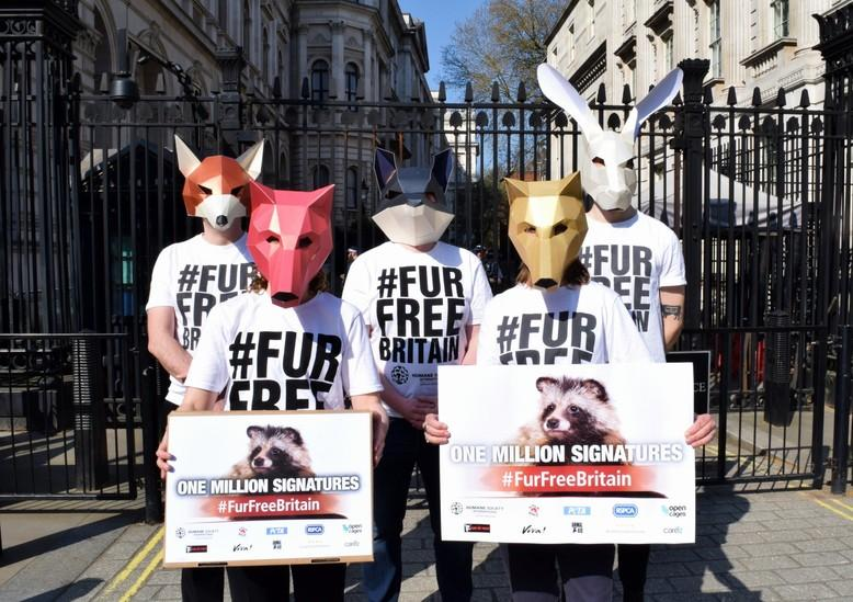 Animal Charity - FOUR PAWS UK