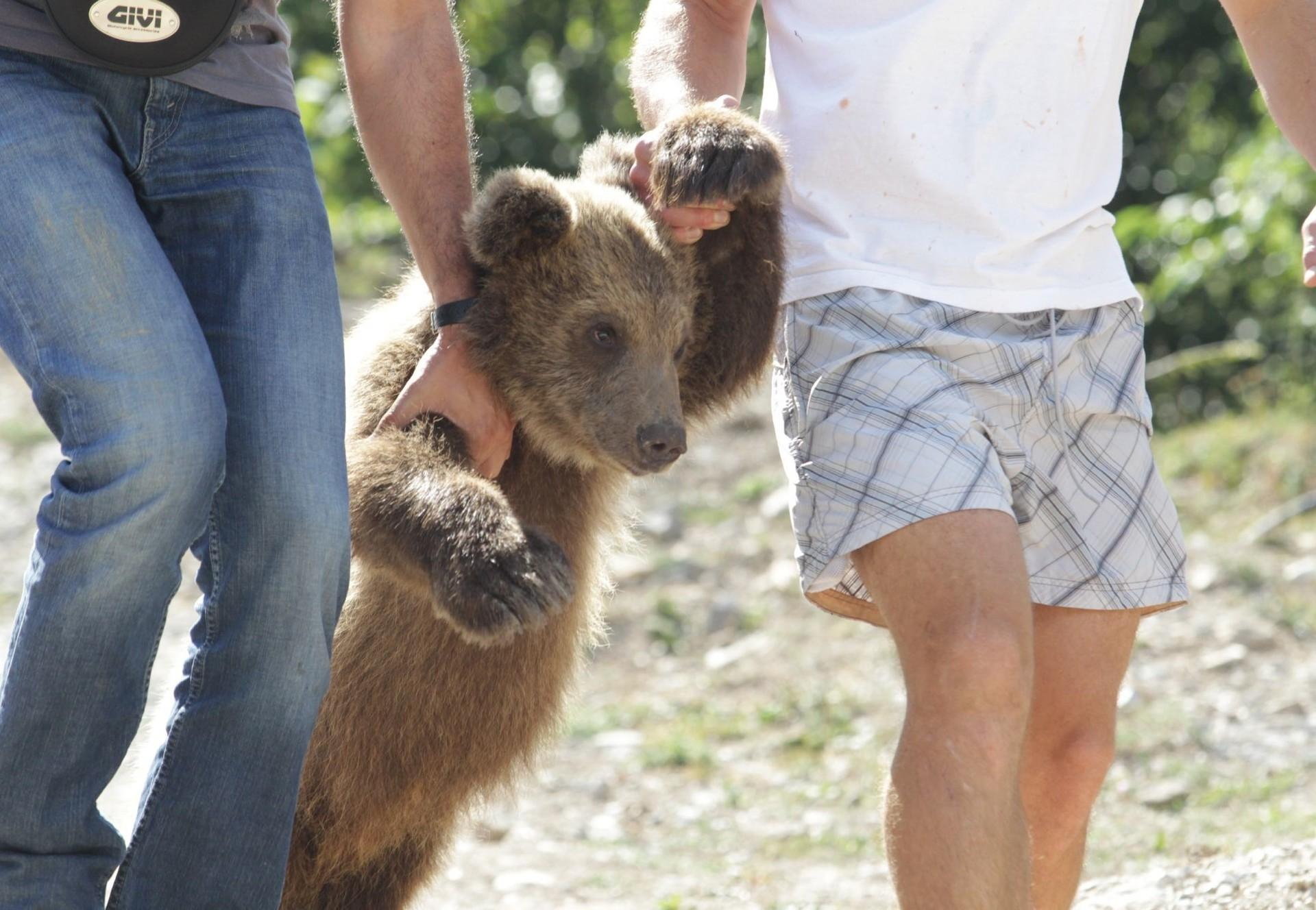 Bear cub kept as restaurant entertainment in Albania