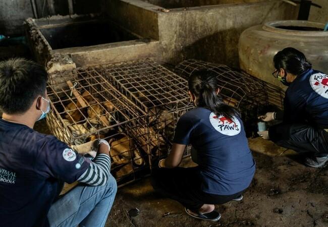 Mitarbeiter befreien Hunde