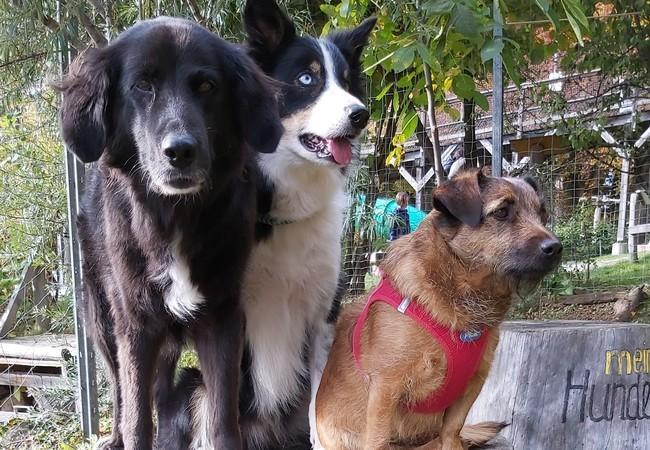 Drei Hunde sitzen auf Holz_Podest