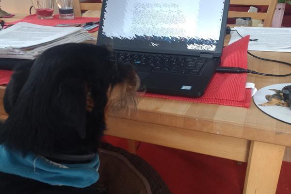Hund Olivia sitzt vor dem Laptop und liest Korrektur