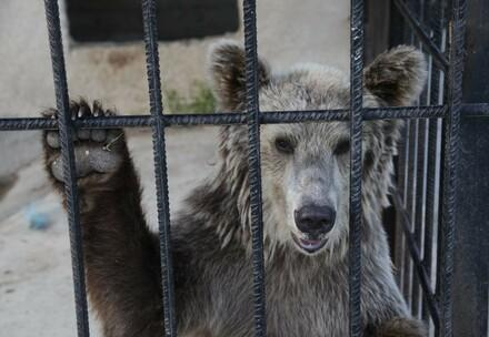 Bears in Southeast Europe