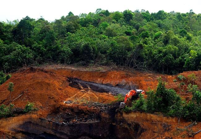 Borneo rainforest destruction