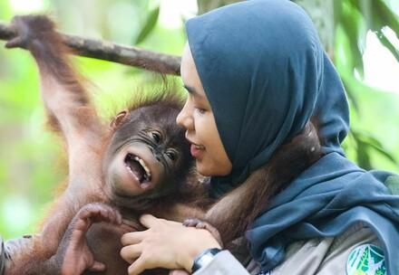 Orangutan with foster mom